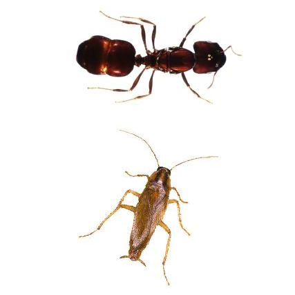 San Antonio Roach, Ant, Odor Control Carpet Cleaning Service Treatment