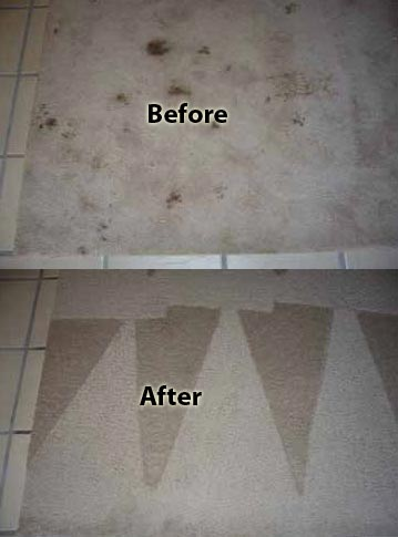 dry cleaning carpet cleaning comparison